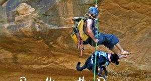 Rappelling with a dog