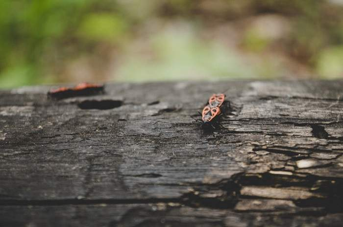 bugs on a tree